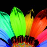 Большой выбор разнообразных расцветок и форм